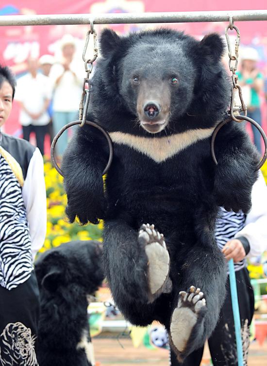 云南野生动物园举办了一场妙趣横生的动物运动会